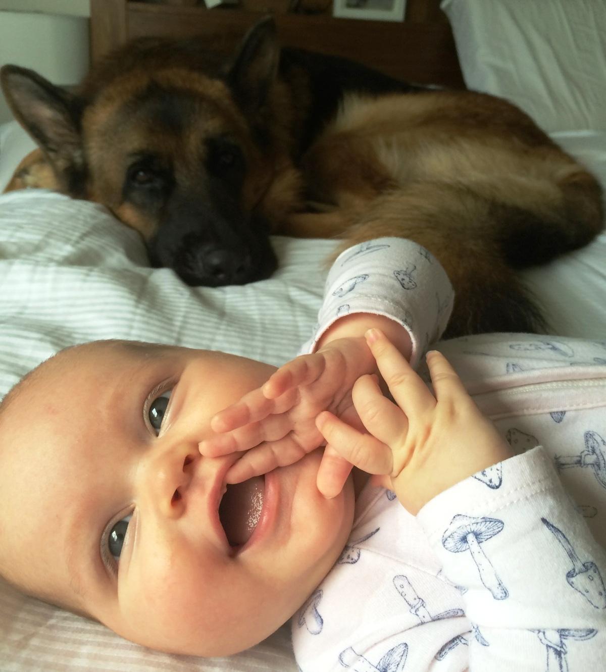 german-shepherd-male-Baldur-with-baby